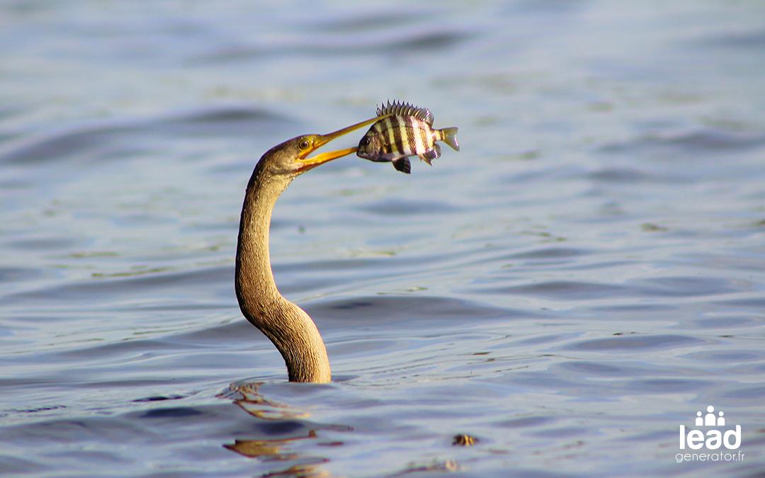 Oiseaux à long cou qui attrape un poisson dans la mer avec son long bec comme s'il était à la recherche d'un lead btob