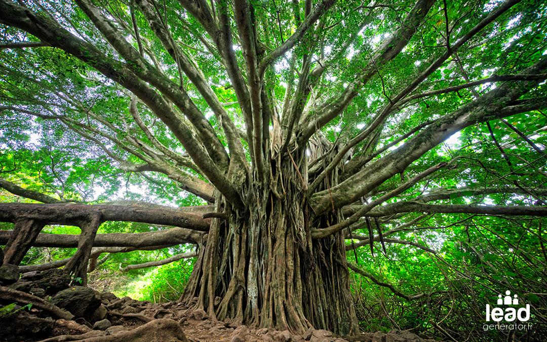 immense arbre possédant de nombreuses branches qui représentent les compétences a obtenir pour faire du growth hacking
