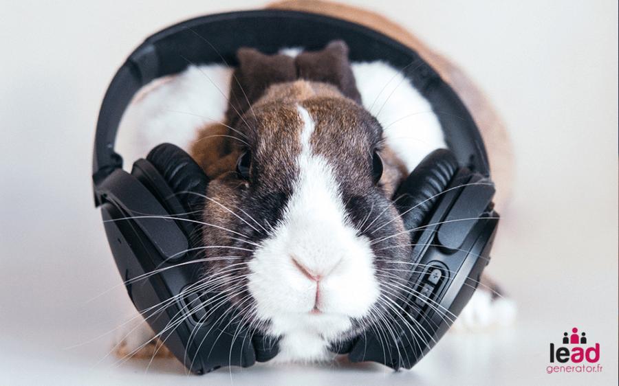 photo d'un lapin avec un casque pour illustrer l'attention des lecteurs dans le marketing de contenu
