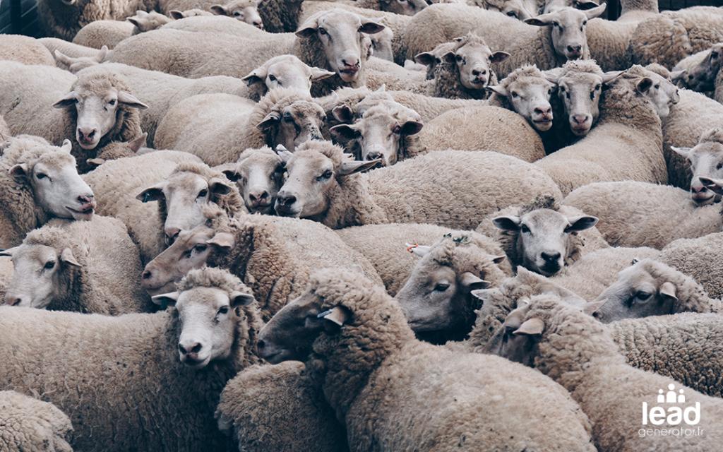 Photo d'un groupe de moutons pour image le concept de cible en content marketing