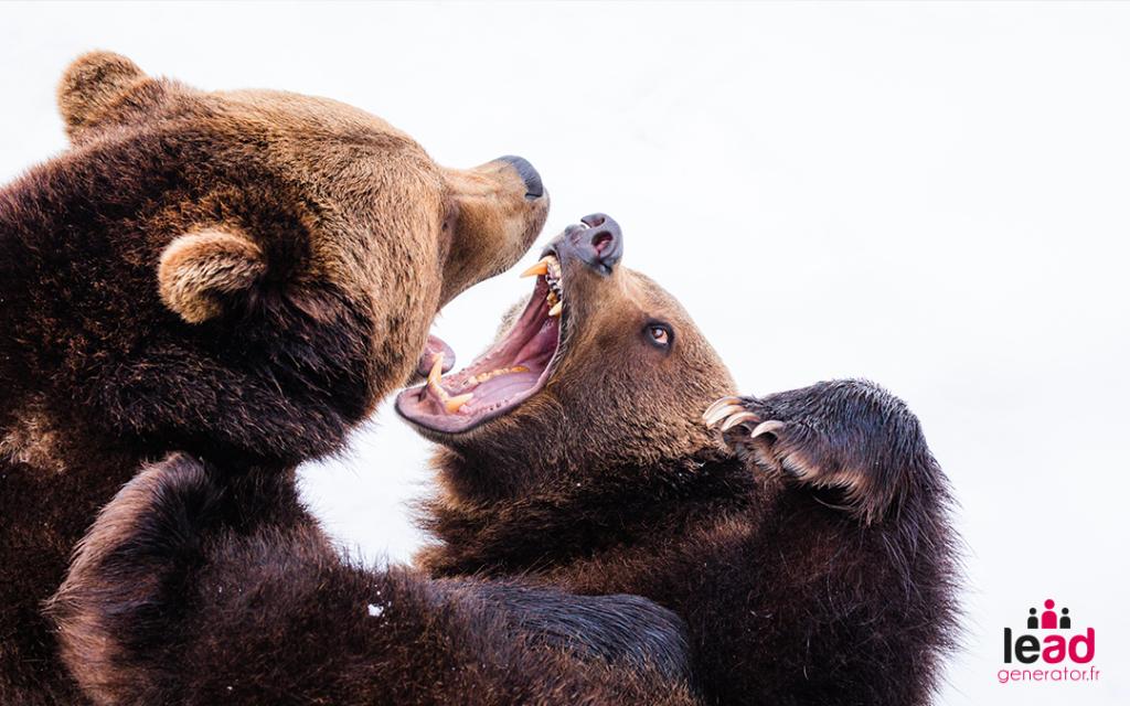 Photo de 2 ours qui combattent pour image la différence entre l'agence lead generator et les prestataires de leads