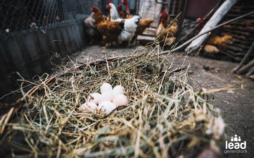 Photo d'un nid avec des oeufs et des poules pour illustrer le lien entre retour sur investissement en marketing digital et moyens