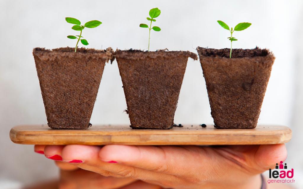 Photo de semis de plantes pour illustrer la notion de retour sur investissement à long terme