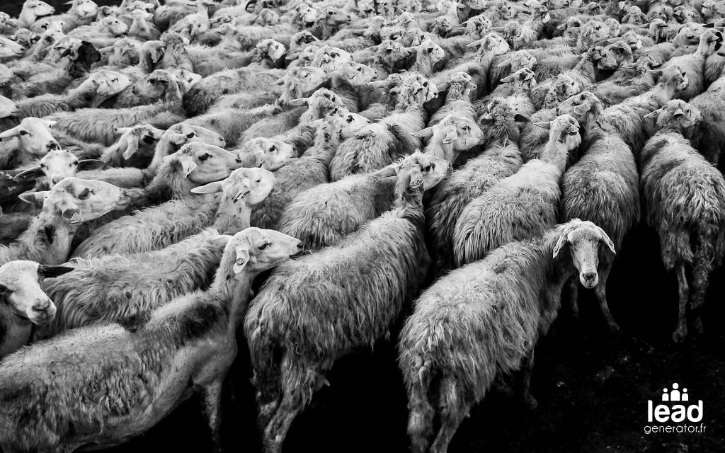 Photo d'un troupeau de moutons symbolisant le marketing d'influence